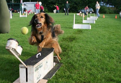 In September Beginnen We Met Een Cursus Flyball