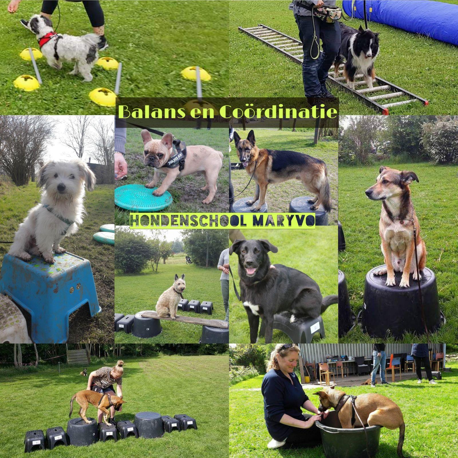 Vanaf Maandag 8 April Start De Cursus Balans En Coördinatie.